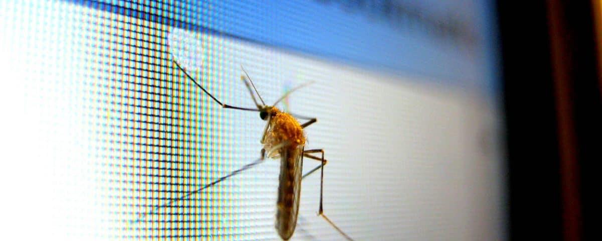 wat te doen tegen muggen in de slaapkamer